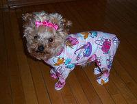 Pajama doggie