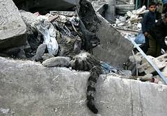 Gaza child cat