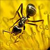 T&l ants