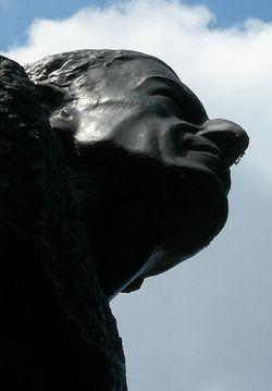 Apolo nasal hair