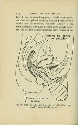 Labia women organs drawing
