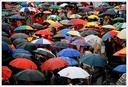 T&l umbrellas