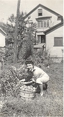 Dfjb 1944 picking tomatoes