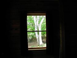 Vermont birch tree out window