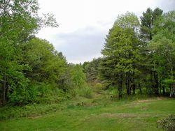 Vermont green view