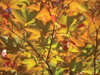 Strod leaves