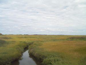 Hyannis marshland with stream