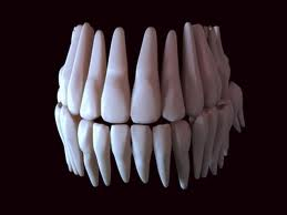 Tooth full mouth