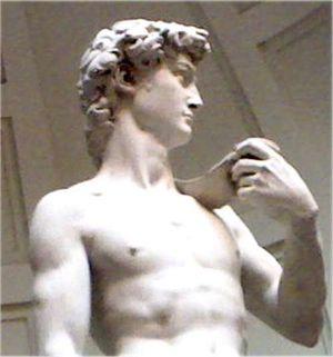 Muscle david