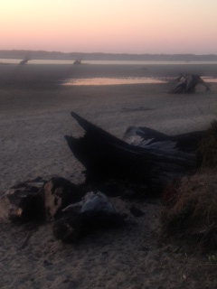LA driftwood at sunset oregon beach