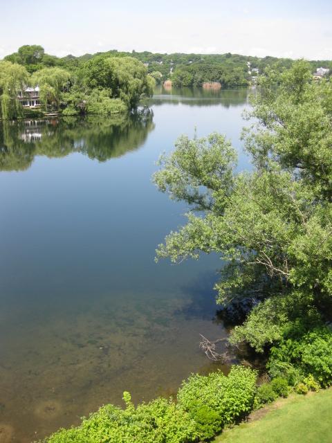 Spy pond water