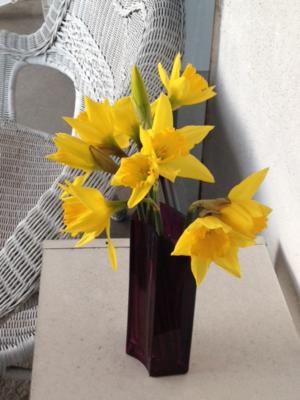 TJ daffodils