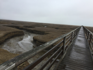 Bass hole boardwalk apr 2019