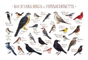 Noise birds