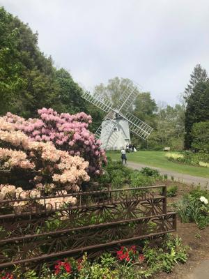 Cape rhodo windmill